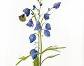 Flower & Butterfly - Flow...