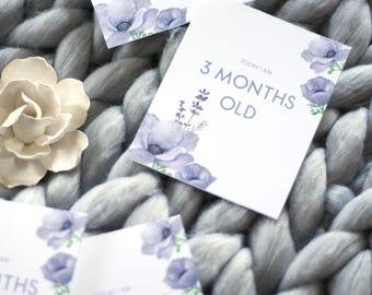 Baby Milestone Cards, Ultra Violet Milestone Cards, Printable Baby Milestones, Baby Month Signs, Purple Baby Milestone Cards, Baby Girl