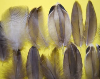 CS9 - Set of natural feathers brown/beige whistling duck 4.5/5 10paires X 5cms