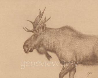 Original drawing of a moose - Moose drawing - Original drawing made with Polychromos colored pencils