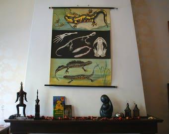 School Chart - Pull Down Chart - Jung Koch Quentell - Reptile Poster - Educational Chart - School Map - Vintage Poster - Lizard Chart