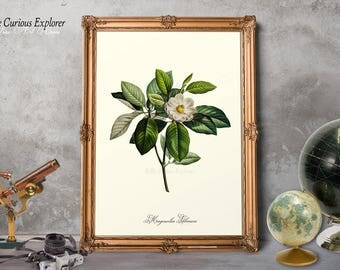Magnolia Art Prints, Magnolia Room Decor, Magnolia Poster, Magnolia Rustic Art, Magnolia Bloom Print, Magnolia Plant Print - E10m3