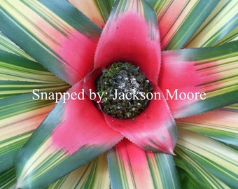 Tropical flower photo