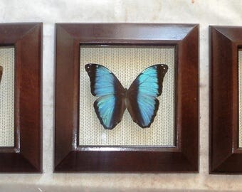 Morpho: a Series of three butterflies in an exclusive framework....Very impressive work!