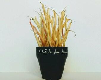 Cactus - vasetto con calamita o terracotta- - magnetic or terracotta pot