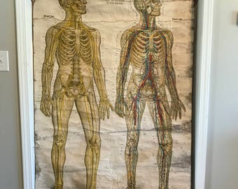 Original American Frohse Canvas Anatomical Chart - Plate No. 3 - Nervous & Circulatory System