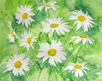 Fresh daisies. Original artwork.