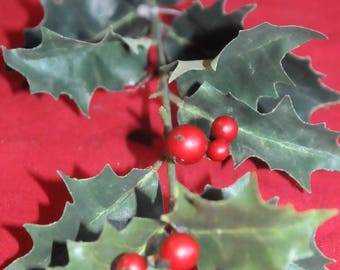 floral: branch of Holly and berries