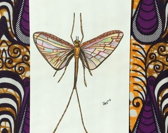Bohemian Colored Cloeon Dipterum - Handdrawn Illustration - Colored Pencils