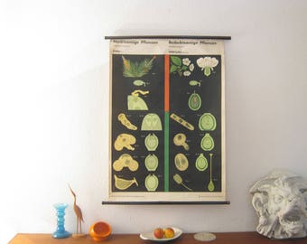 Educational board about plants from the 60s
