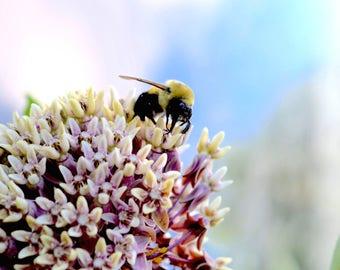 Bee Happy Photograph print