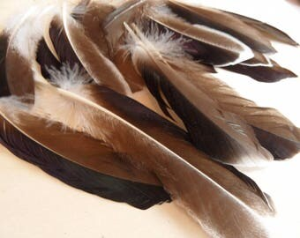 (2) natural duck feathers, Brown mix, taupe, white, (sometimes iridescent)