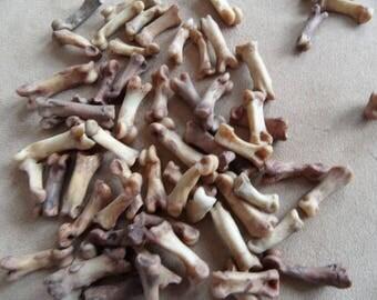 Native American Wolf paw bones, 2, North America.