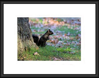 Squirrelly Squirrel, Photography, Free Shipping, Print, Framed Print, Canvas Wrap, Canvas with Floating Frame, Wall Art, Home Decor, Nature