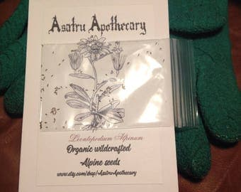 Organic Wildcrafted Alpine Edelweiss seeds, Alpinie flower seeds Eidelweiss, organic seeds, folklore, non-gmo seeds, flower seeds