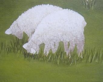 Vermont Sheep