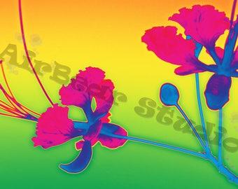 Desert Flower2