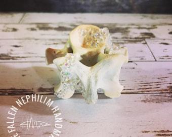 Crystal Geode Style Wild Deer Spine Bone, Macabre Oddities, Curio Oddity, Spinal Bones, Paperweight, Beautiful