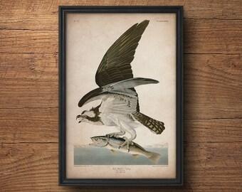 Audubon bird print, Hawk print, Osprey print, Antique bird print, Audubon print, Birds of America, John James Audubon, Wall decor, Large art