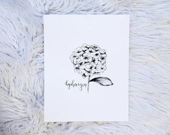 Hydrangea Bloom / Flower / Hand Drawn