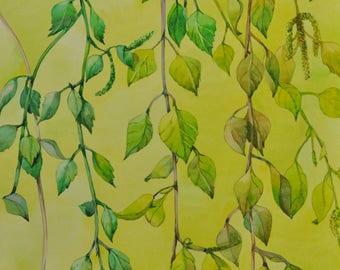 Original watercolor painting, watercolor , Birches in Spring, floral still life, botanical art, nature art, wall decor original artwork