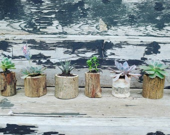 Live edge mini planter Wedding favors // shower favours -set of 50 // rustic wedding // bulk // add live plant // thank you gift