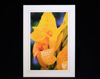 Photo Cards, Customized Cards, Note Cards, Greeting Cards, Photo Note Cards, Floral Note Cards, Photo Greeting Cards, Colorful Note Cards