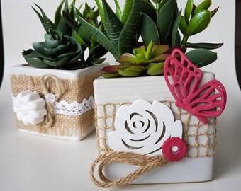 Decorative fatty plants with square base. Size 8 x 8 cm