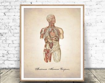Human Anatomy Print, Digital Download, Human Body Print, Human Anatomy, Human Anatomy Printable, Human Anatomy Body, Human Anatomy Download
