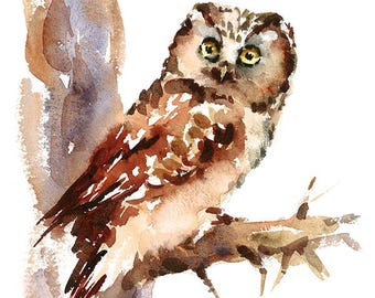 Owl Bird Watercolour Painting Q48