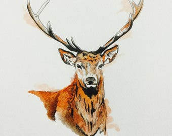 Stag in Pen & Ink