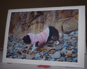 Daisy Doo cards - photos of our dog Daisy in and around Whitby.  Daisy steals everybody's heart whom she comes across.