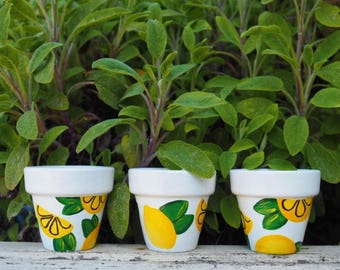 Hand painted lemon terracotta succulent cactus plant pot