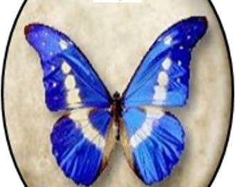 1 cabochon glass 25mm x 18mm Butterfly theme