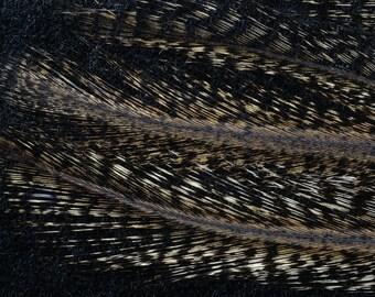 6 feathers COQ DE LEON dark pardo fishing fly jewelry