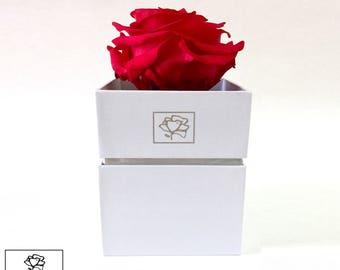 Preserved Roses/ Gift Box/ Roses/ Decoration/ Bird-Rose