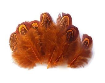 Orange pheasant feathers