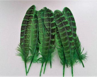 set of 10 feathers green 10-15cm