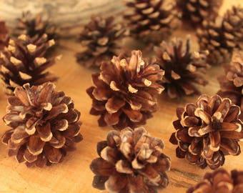 Set of 20 natural pine cones