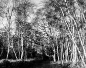 Holme Woods
