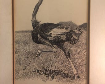 "Fantastic original signed drawing of ostrich titled "" ostrich with head not in the sand """