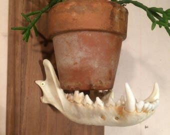 Coyote Jaw Planter