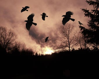 Crows in the Evening by Native American Artist Print of Original