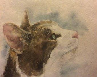Cat portrait - commissions