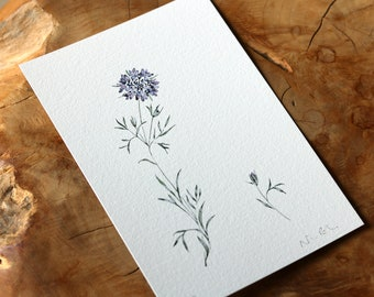 Scabious Wild Flower Watercolour Limited Edition Fine Art Print
