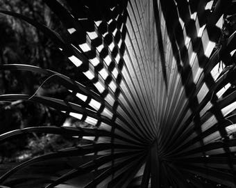Black and White Photo Shadow Pattern on a Texas Palm Tree Frond // Nature Photography in Austin, Texas