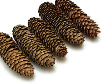 Spruce cones 5 pcs, christmas wreath cones, dry fir cones, floristic decoration, wedding decoration, big cones, rustic craft cones #1