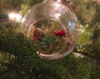 Living Succulent Ornaments