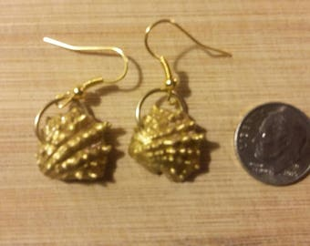 Real seashell. Rare find dime size. Hand crafted earrings