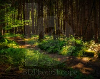 Trail in the Forest | Landscape Photo Art | Nature Lover Gift | Fine Art Photography | Personalization | BDPhotoShoppe | Home Office Decor
